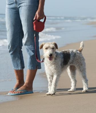 Coleira Guia Retrátil para Cães   - Thata Esportes