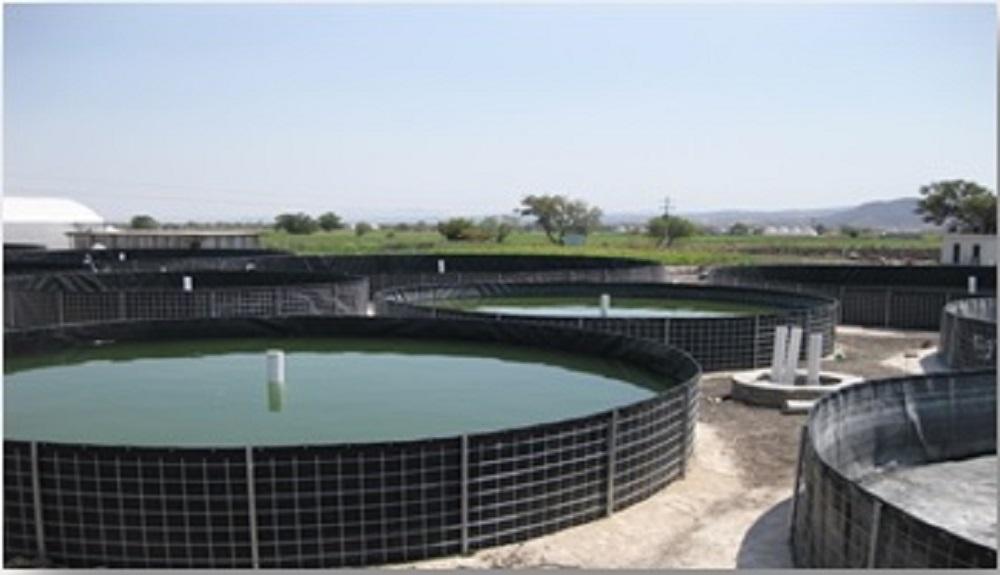 Tanque circular piscicultura pead 1 0mm for Cria de tilapia en estanques plasticos