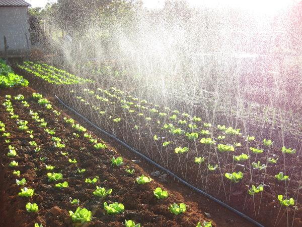 Mangueira perfurada irrigação com 100 metros - Santeno I  - Elétrica Raio