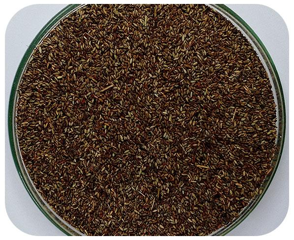 Sementes Aruana - Caixa com 2,0 kg - (72%VC)