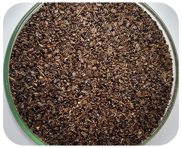 Sementes Pojuca - Caixa com 2,0 kg (60%VC)
