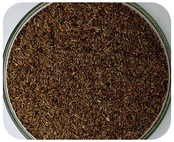 Sementes Mombaça - Caixa com 2,0 kg - (72%VC)
