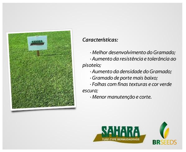 Sementes Grama Bermuda Sahara - Caixa com 500 gr (79%VC)