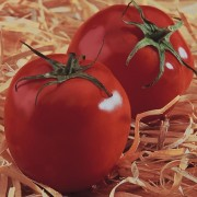 Semente Profissional Tomate Sta Cruz Kada Gigant Feltrin 50g