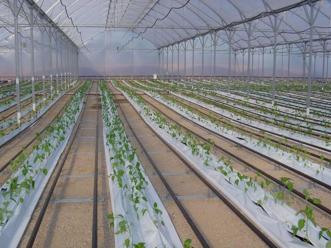 Filme Plastico Estufa Agricola 10m X 8m 100 Micras  - Casafaz