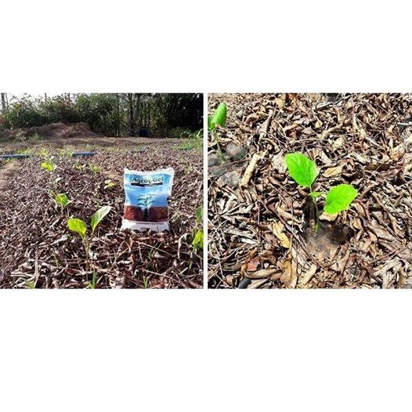 Gel Para Plantio Condicionador De Solo Agrogel Hidrogel 1Kg  - Casafaz