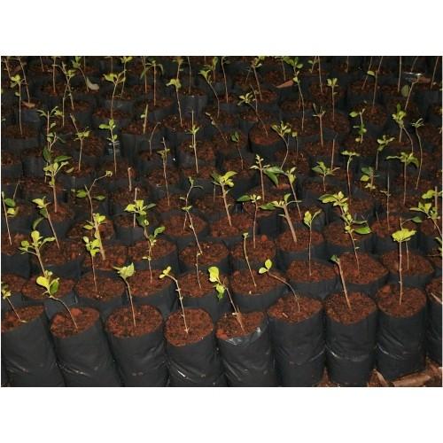 Saco Saquinho Plástico Para Mudas 08 X 15 7000 Unidades  - Casafaz