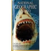 Caçada Ao Grande Tubarão Branco National Geographic