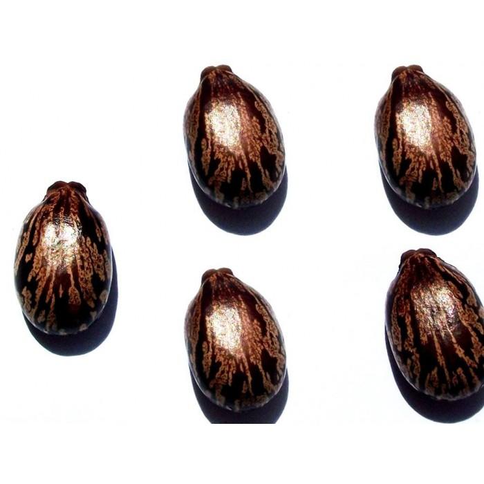 Sementes de Mamona Vermelha (Mamona Fogo) 15 unidades
