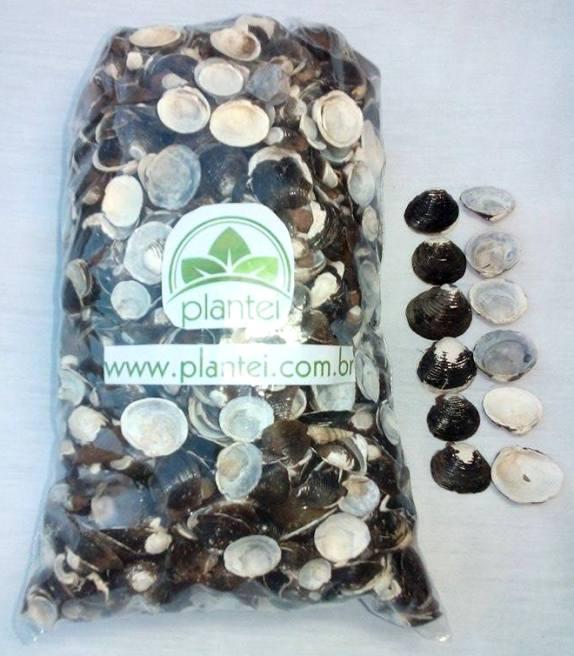 Conchas de água doce para uso diverso Plantei - 500g