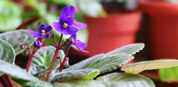 Fertilizante em p� Leven Jardim Violeta 100g