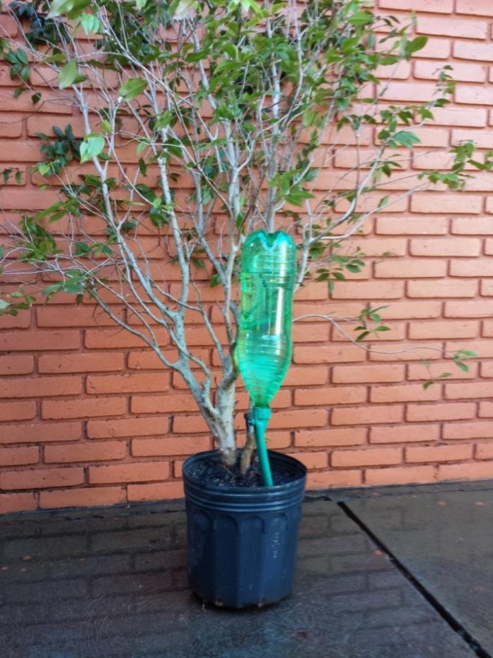 Gotejador acopl�vel em garrafa pet Petgotta - Acqua Vitta Floral