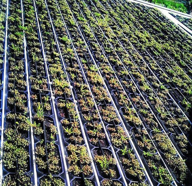 Mangueira irrigação com micro poros transpirante 5/8 15m