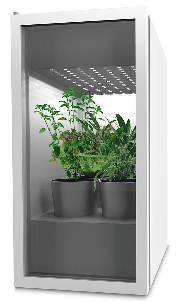 Mini Plantário Estufa Doméstica para interiores