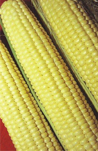Sementes de Milho-Verde Híbrido Itapuã 700 pacote com 1kg - Isla Pro