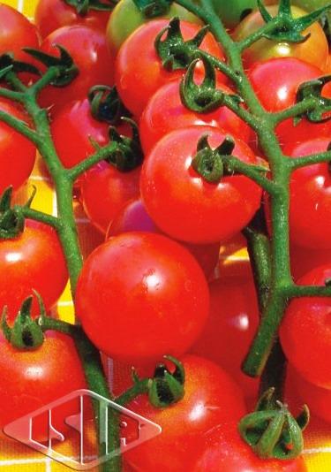 Sementes de Tomate Cereja - Isla Superpak