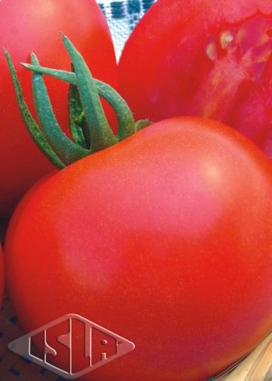 Sementes de Tomate Santa Clara I-5300 - Isla