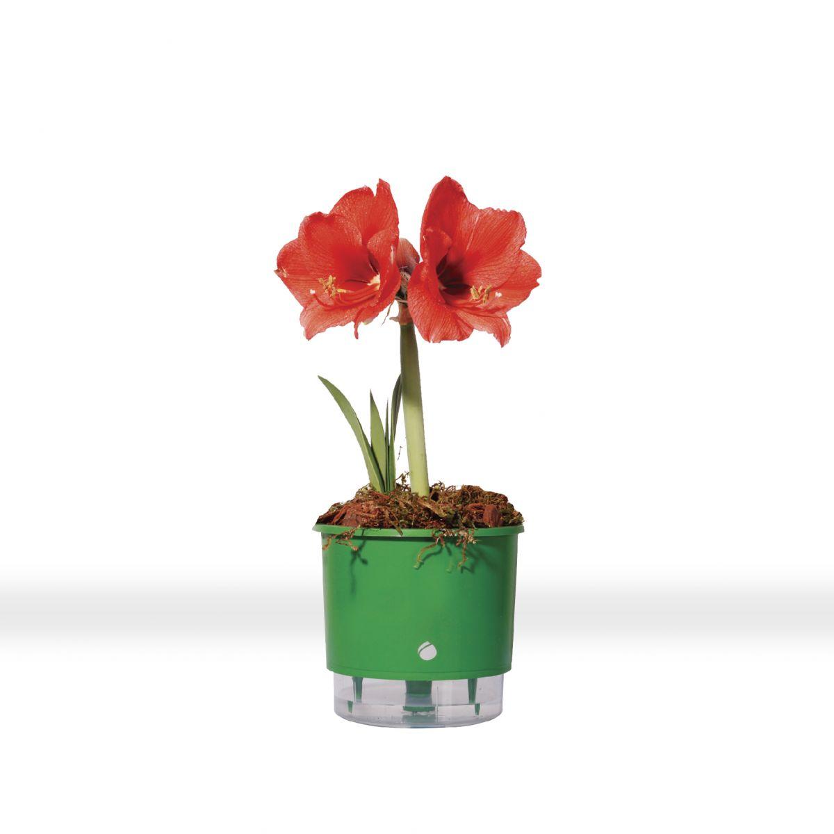 Vaso autoirrig�vel Raiz M�DIO 16 cm X 14 cm