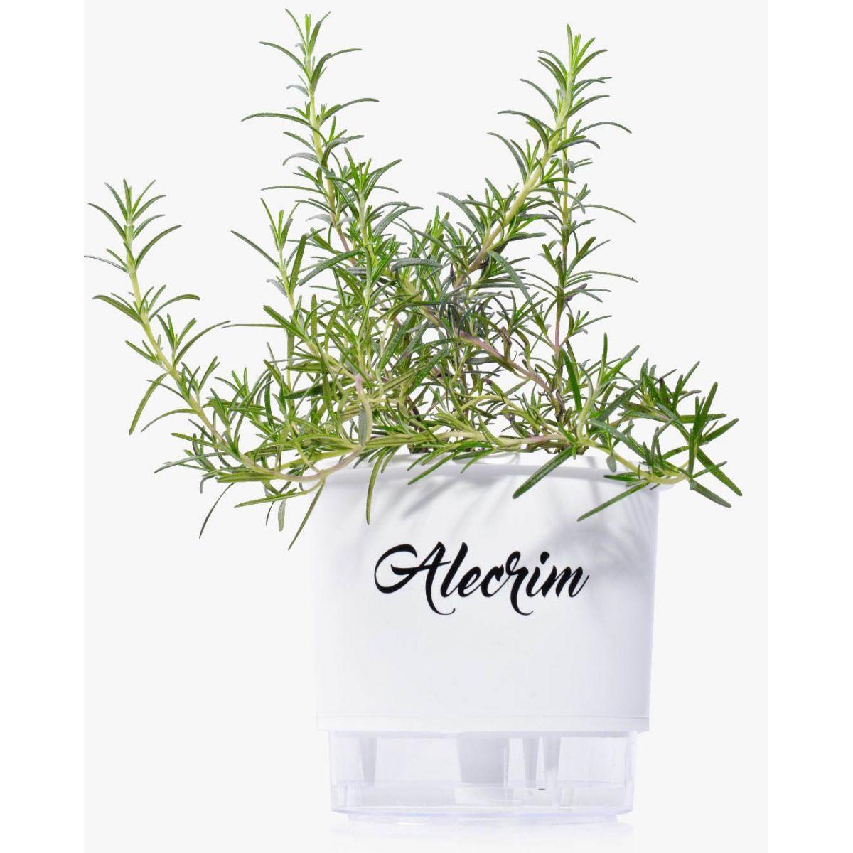 Vaso com reservat�rio de �gua (Autoirrig�vel) M�dio Branco Linha Gourmet 16 cm x 14 cm