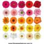 Cartela de Flores New P - adesivos com 68 flores iguais - Escolha a sua