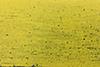 Demolição - Amarelo
