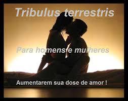 Tribulus 500 mg (Estimulante Natural da Testosterona) 60 cps