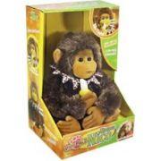 Aluguel Macaco Nico