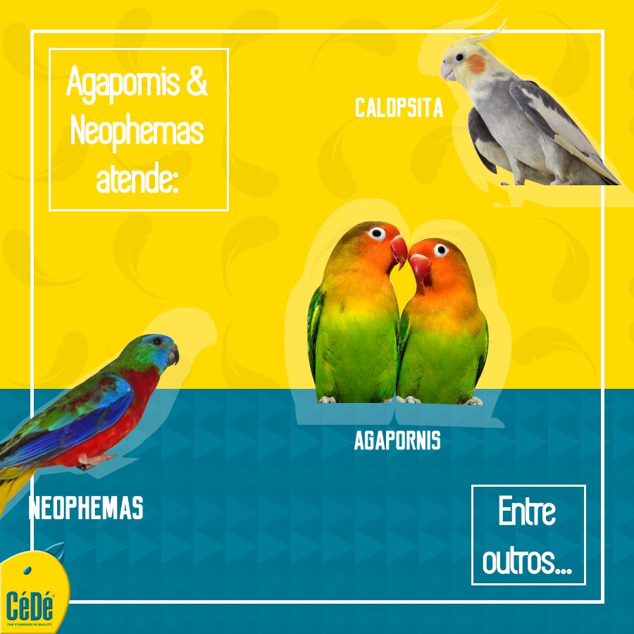 Agapornis e Neophemas - Kg (Farinhada)  - CéDé Brasil