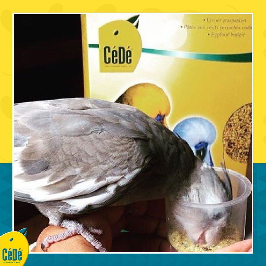 Eggfood Budgies (Calopsitas e outros)  - CéDé Brasil