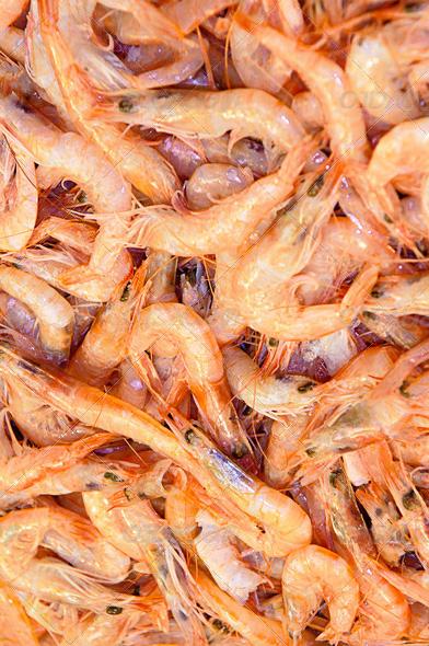 Ração Bcuk First Bite Freeze Dried Krill Superba 5 Gramas.  - KZ Power