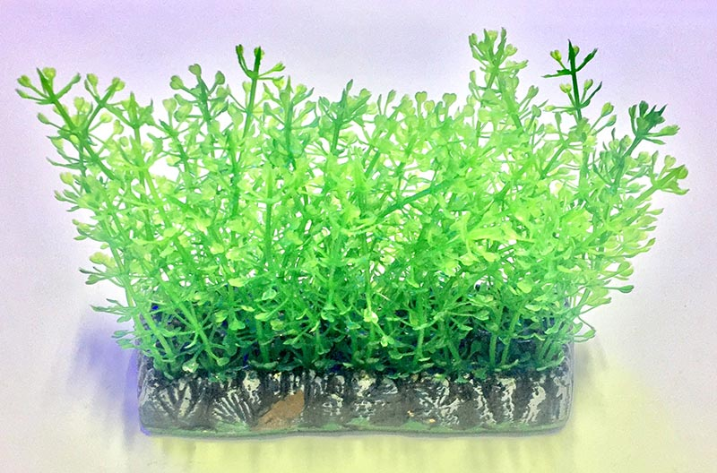 Planta Artificial P/ Aquarios Tapete Blyxa 10cm Soma 064519  - KZ Power