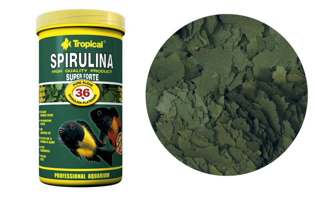 RAÇÃO SUPER SPIRULINA FORTE FLAKES 50gr TROPICAL  - KZ Power