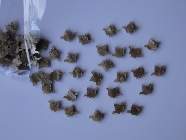 """Inlay/Marcações (dots) formato """"flor"""" - Padrão 4 - Acrílico caramelo perolado - 12mm x 9,4mm x 2mm (Pacote com 12 un)  - Luthieria Brasil"""