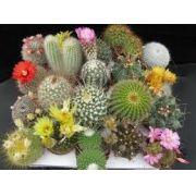 Sementes De Cactus 20 Tipos Sortidos Mini Cactos