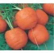 100 Sementes De Cenoura Redonda De Nice