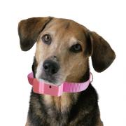 Coleira Anti-latido, Smart 2 Plus, Rosa, Bateria p/ 6 meses, N�o maltrata o animal