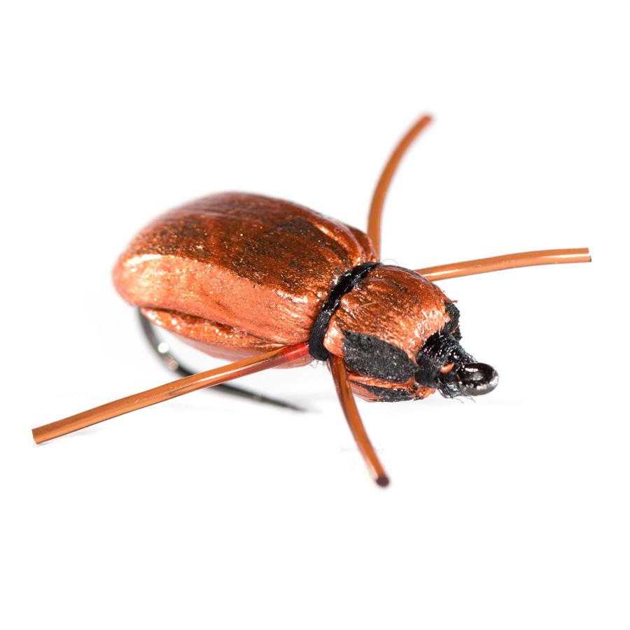 Good Dr's Beetle