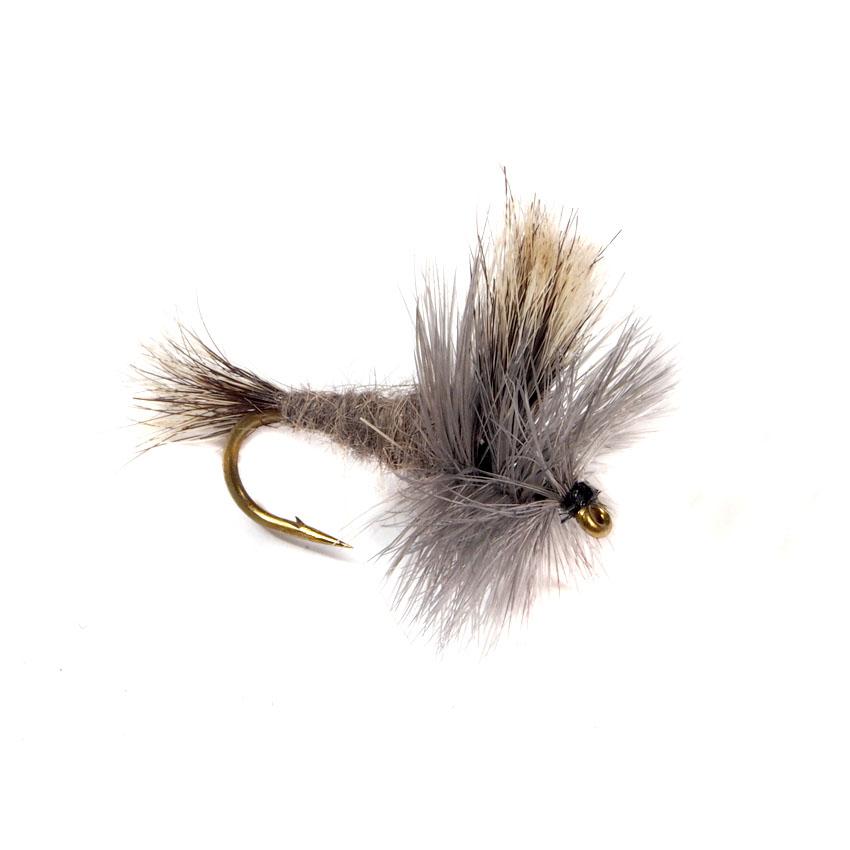 Grey Wulff