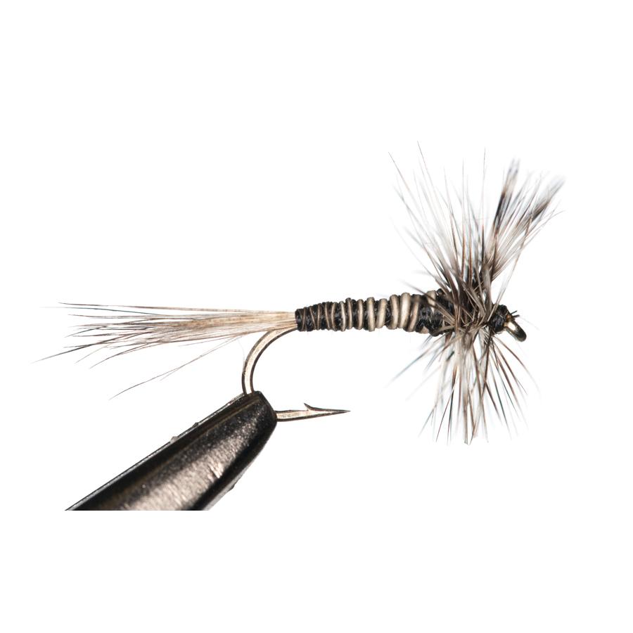 Mosquito (#20)