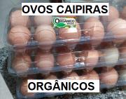 OVOS CAIPIRAS ORGÂNICOS - 1 Dúzia - Agricultor Denival