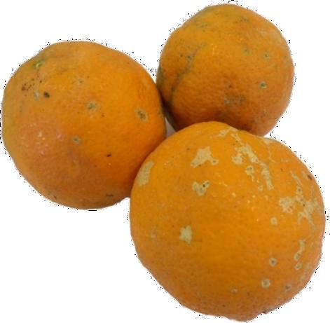 Limão Rosa Agroecológico - 6 Unidades (+- 500g)!