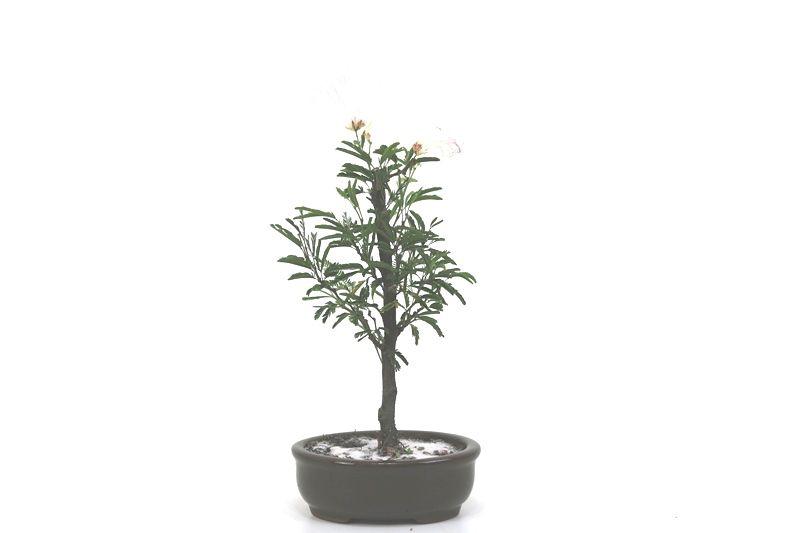 Bonsai Caliandra Rosa 02  anos - medida da planta (AxL) 20x10 centímetros