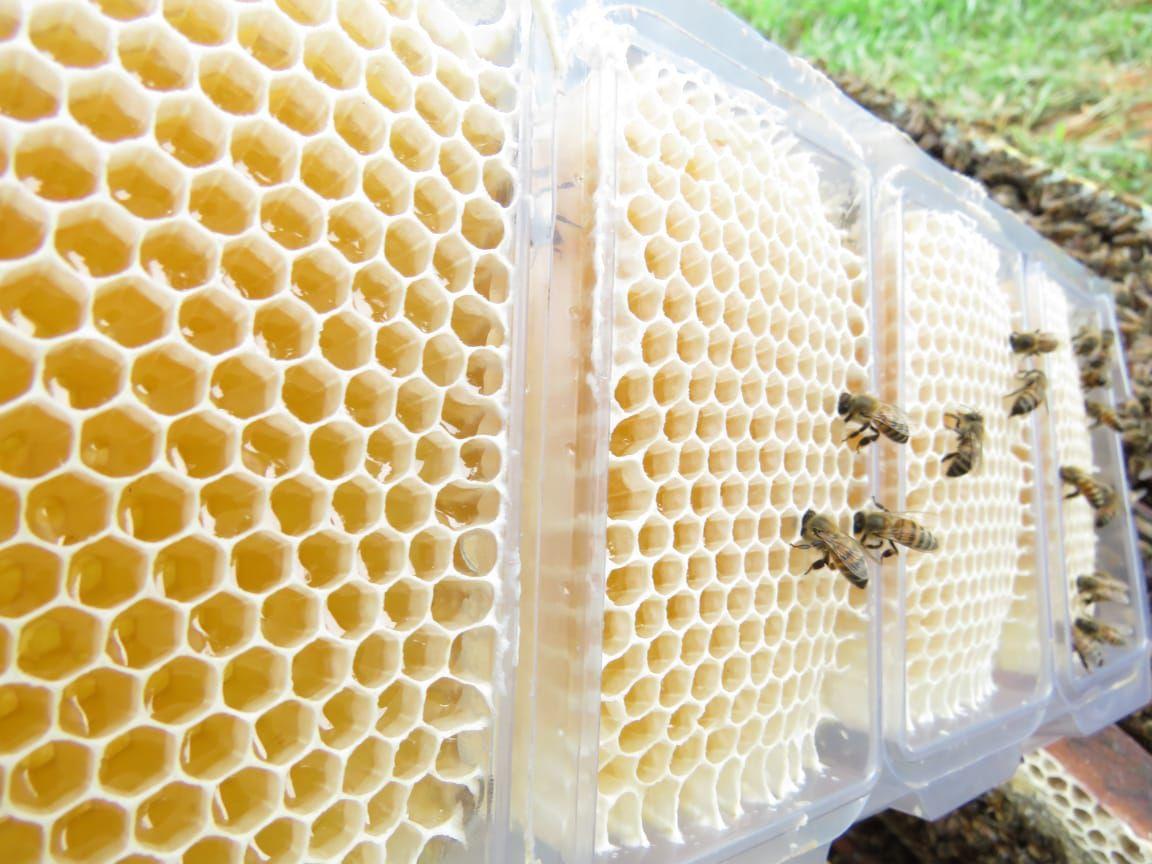 Caixilho Plástico para Favos in Natura aberto