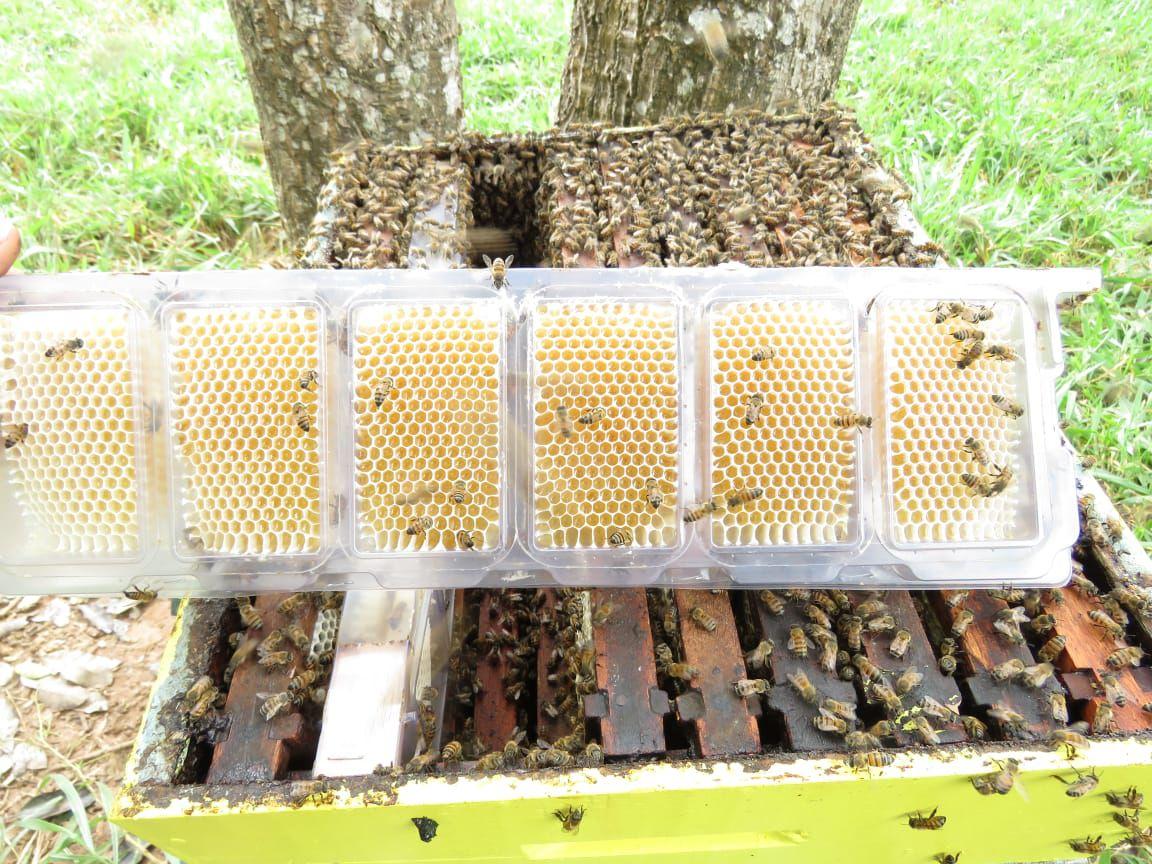 Caixilho Plástico para Favos In Natura Aberto Embalagem com 10 unidades