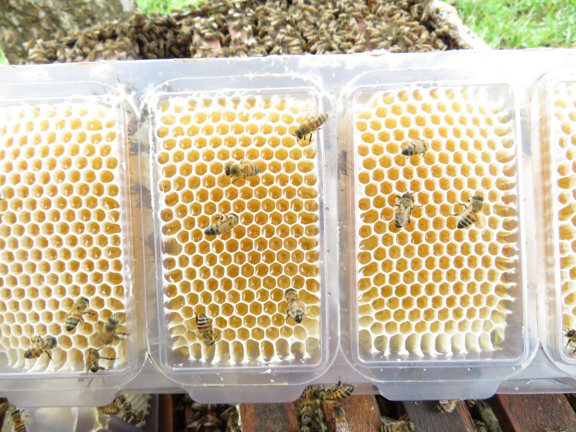 Caixilho Plástico para Favos in Natura montado