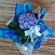 Hortência Azul no cachepô
