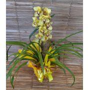 Orquídea Cymbidium amarela 1 haste