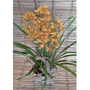 Orquídea Cymbidium dourado 4 haste no cachepô