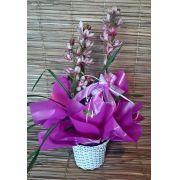 Orquídea Cymbidium Rosa 3 haste no cachepô