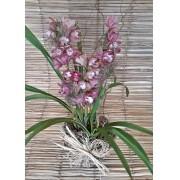Orquídea Cymbidium Rosa escuro 4 haste no cachepô